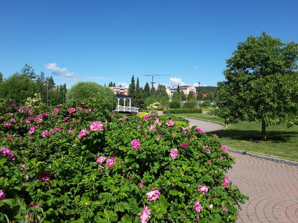 Ruusupensas puistossa.